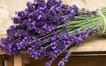 bouquet-of-purple-lavender-flowers